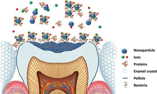 Nanodentistry Photo