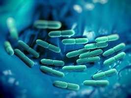 Probiotic in nutrition advancement Photo