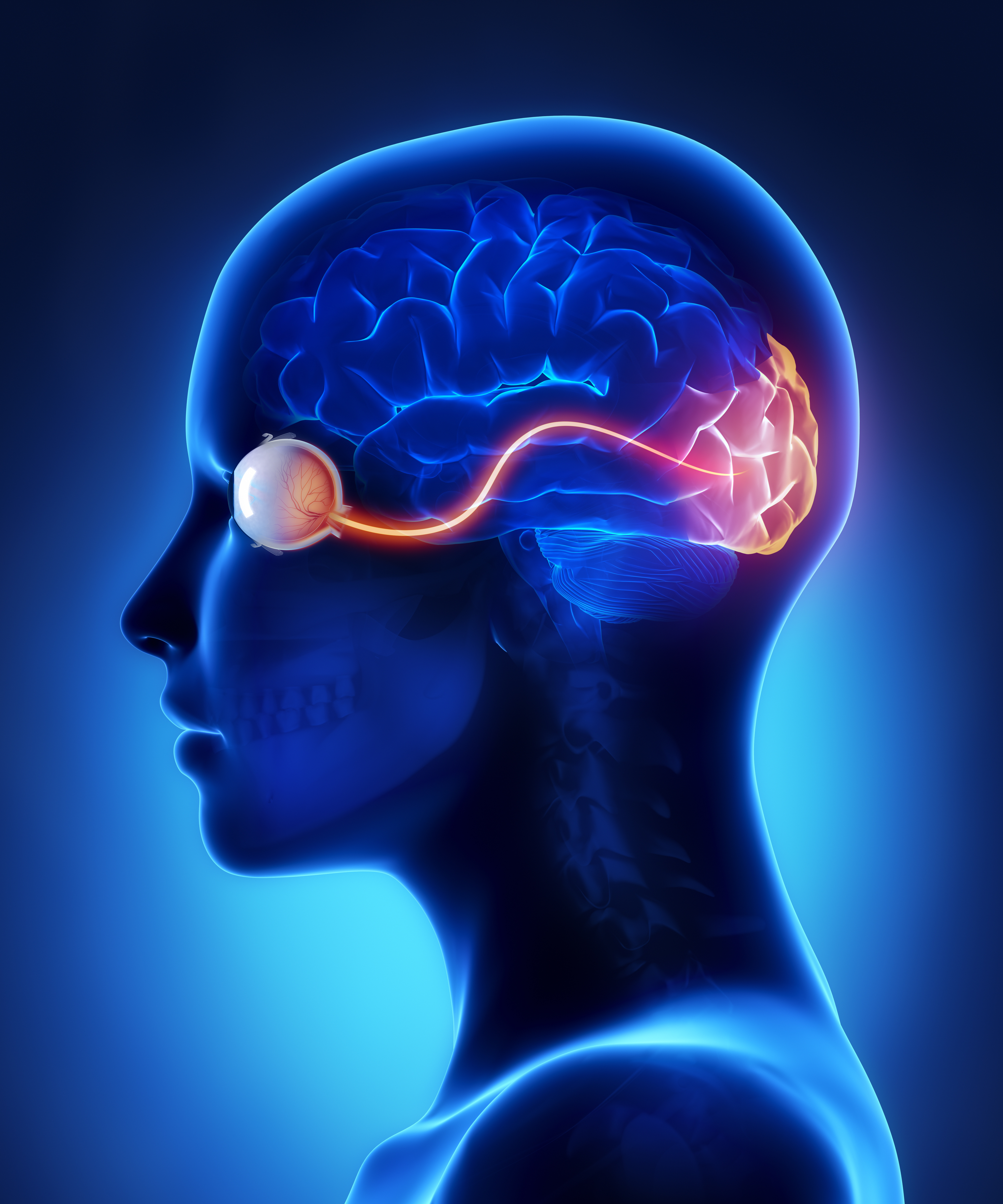 Neuro -ophthalmology Photo