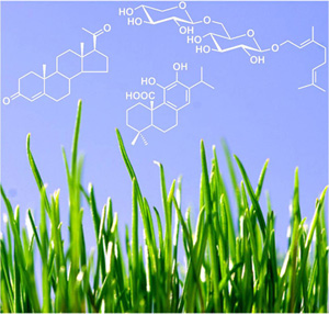 Natural Product Chemistry Photo