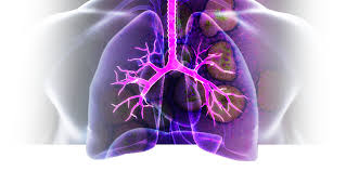 Pathophysiology of COPD Photo