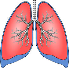 Diagnostic Evaluation of Lung cancer and COPD Photo