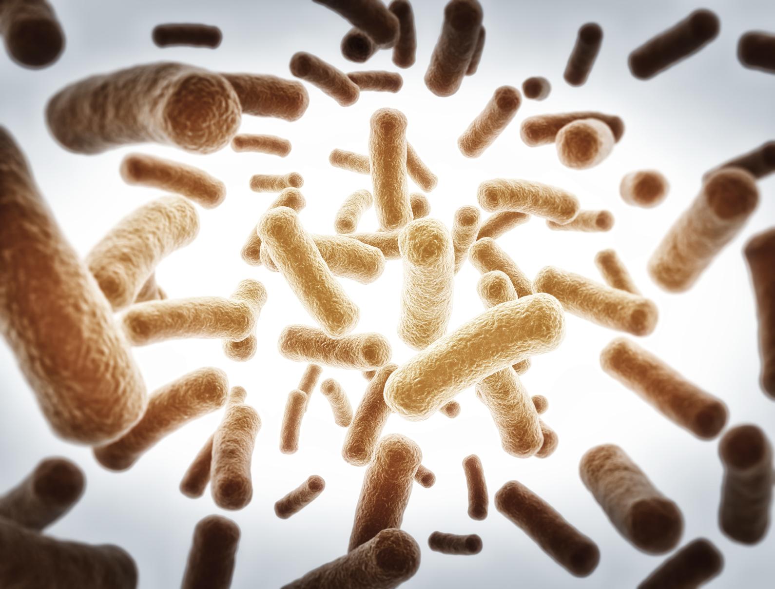 Pathogenic Yeast and Food Spoilage Photo