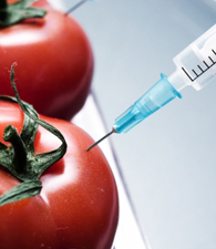 Food and Nanotechnology Photo