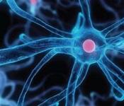 Biophotonics and Biomedical Optics Photo