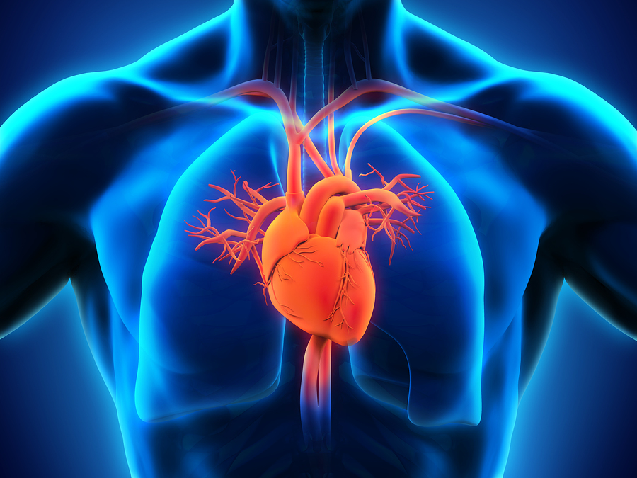 Cardiology and Emerging Heart Diseases Photo