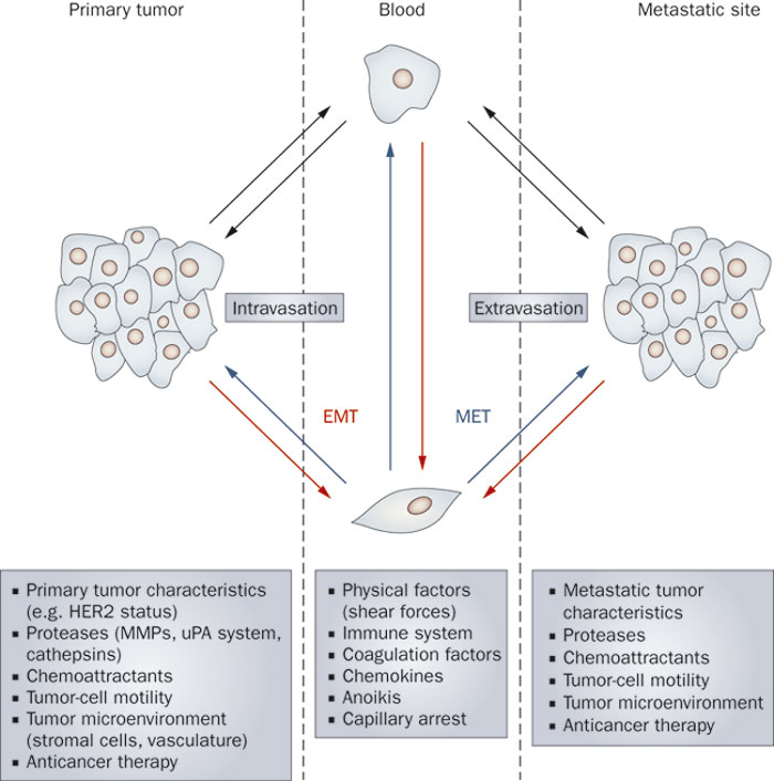 Molecular Mechanisms of Breast Cancer Photo