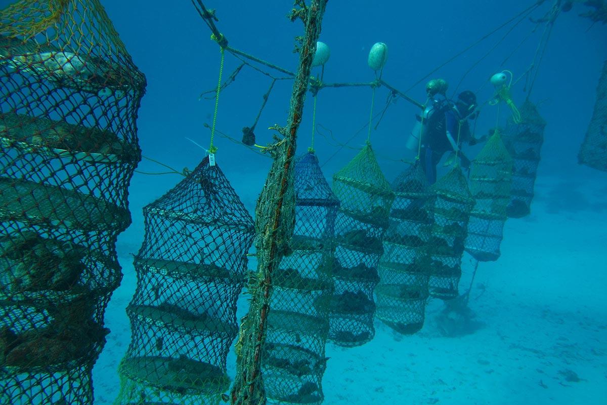 Aquaculture and Marine Biotechnology Photo