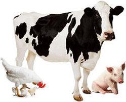 Animal Biotechnology Photo