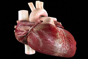 Heart Failure Photo