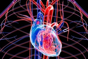 Cardiac and Cardiovascular Research Photo