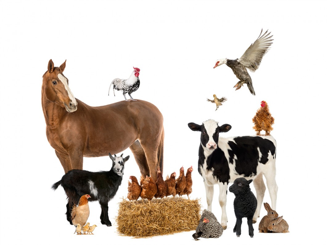 Animal Nutrition and Animal Feed Photo