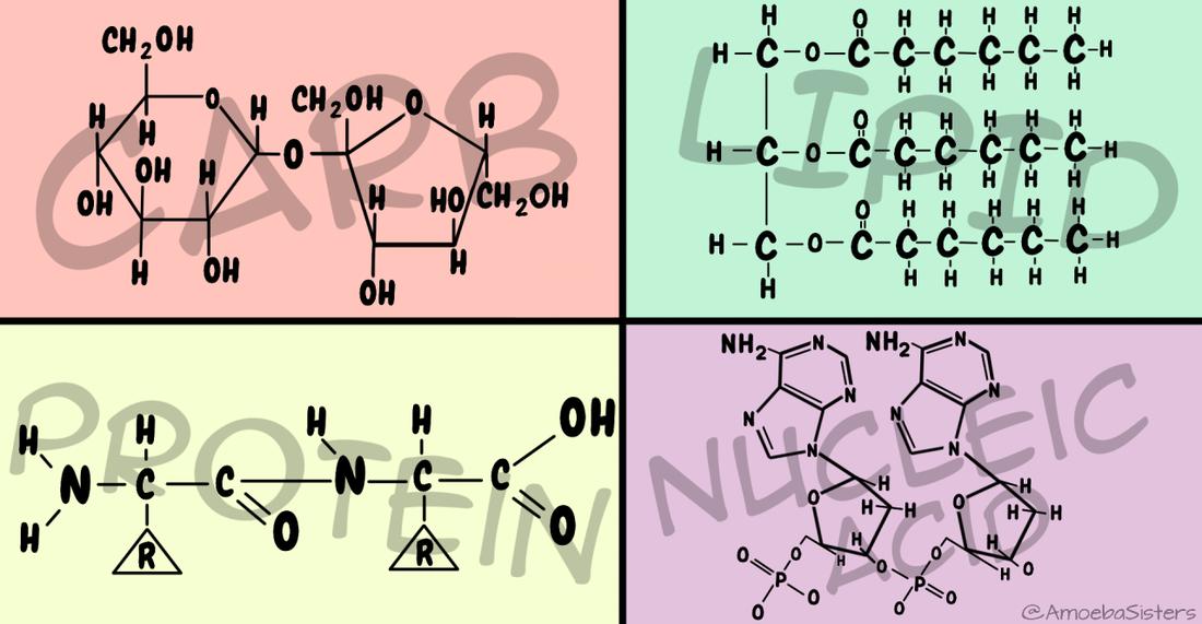 Organic Chemistry of Bio Molecules Photo