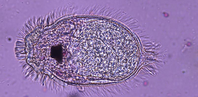 Veterinary Parasitology  Photo
