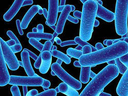 Clinical Bacteriology Photo