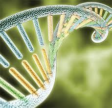 Genetics in Rheumatology Photo