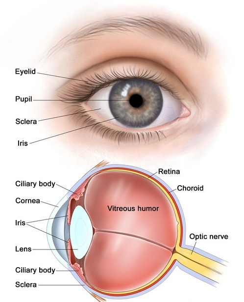 Clinical and Surgical Ophthalmology  Photo