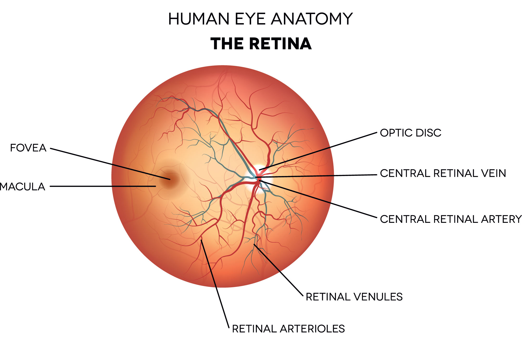 Retina and Retinal Disorders Photo