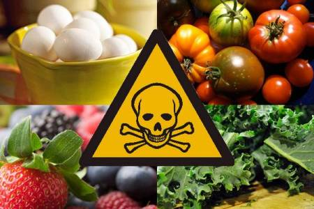 Food Toxicology Photo