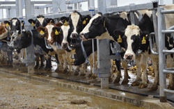 Dairy hygiene and its maintenance Photo