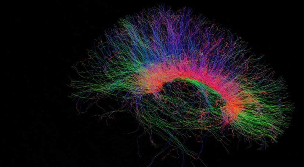 Neuroimmunology Photo