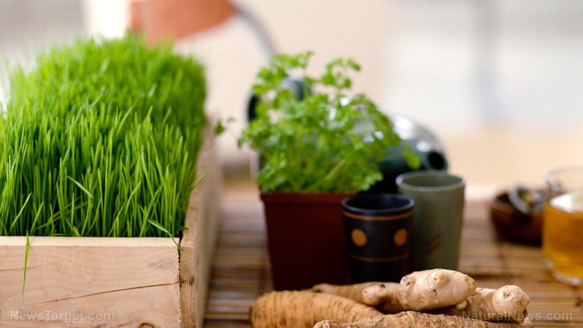 Anti-microbial and Medicinal Plant  Photo