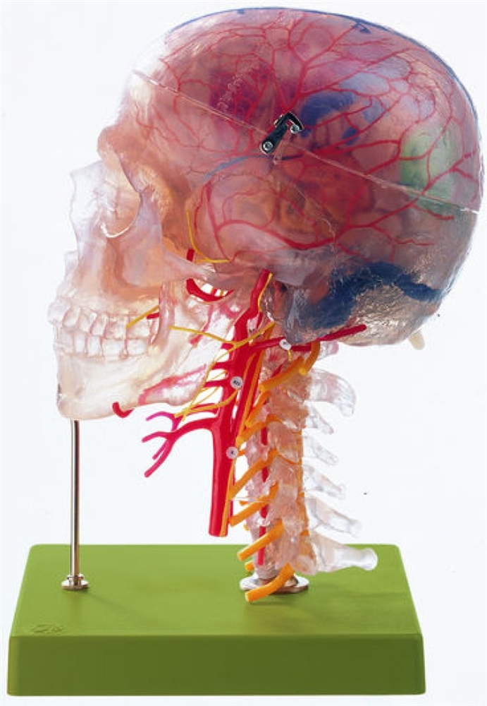 OPERATIVE NEUROANATOMY Photo
