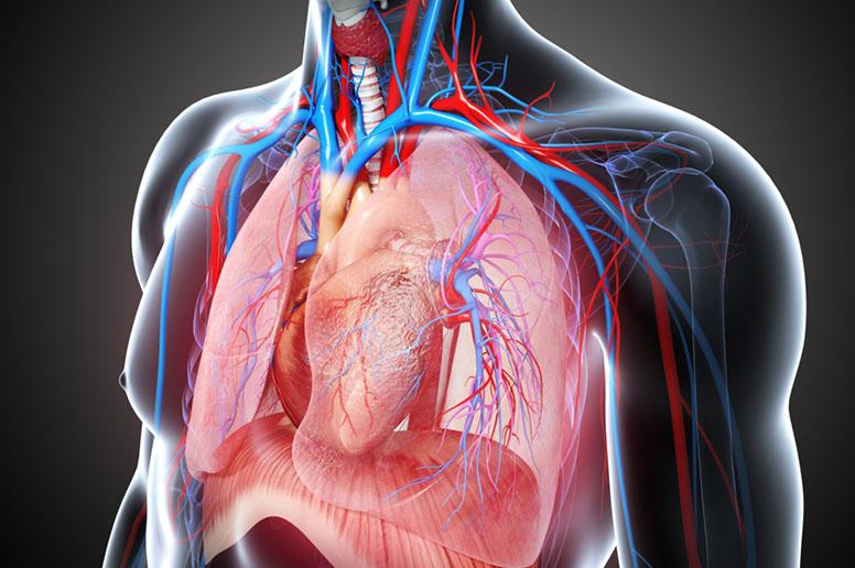 Cardiothoracic surgery Photo