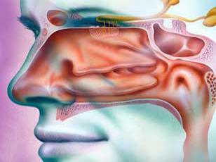 Otorhinolaryngology Surgery Photo