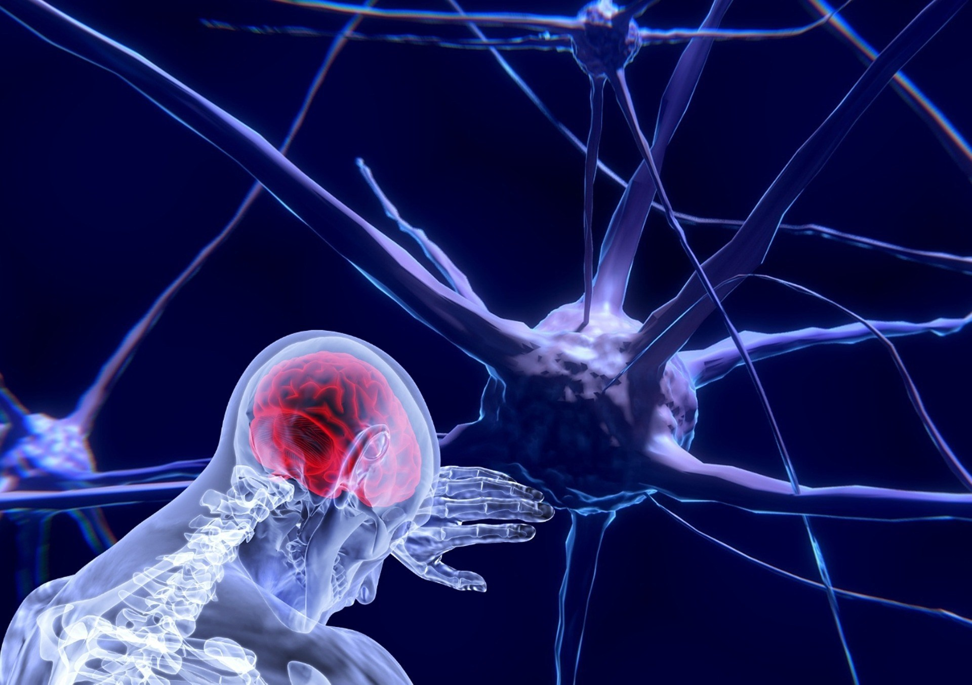 Cognitive Neuroscience and Neurogenetics Photo