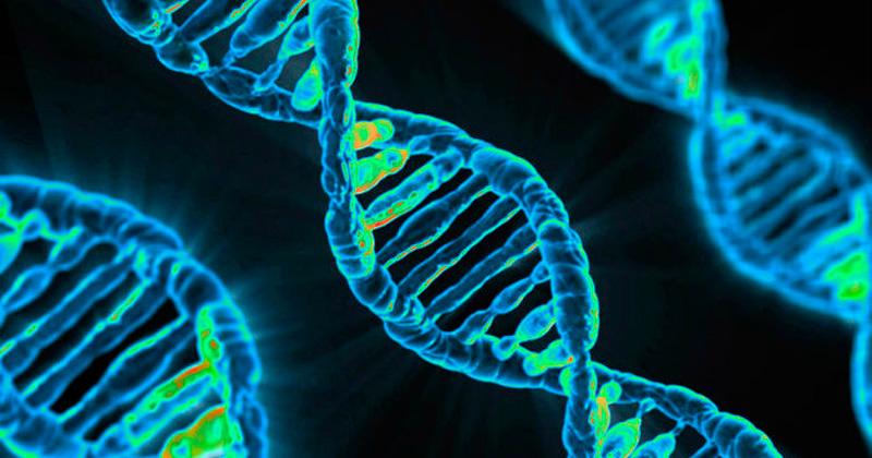 Neurogenetics and Neuropathology Photo