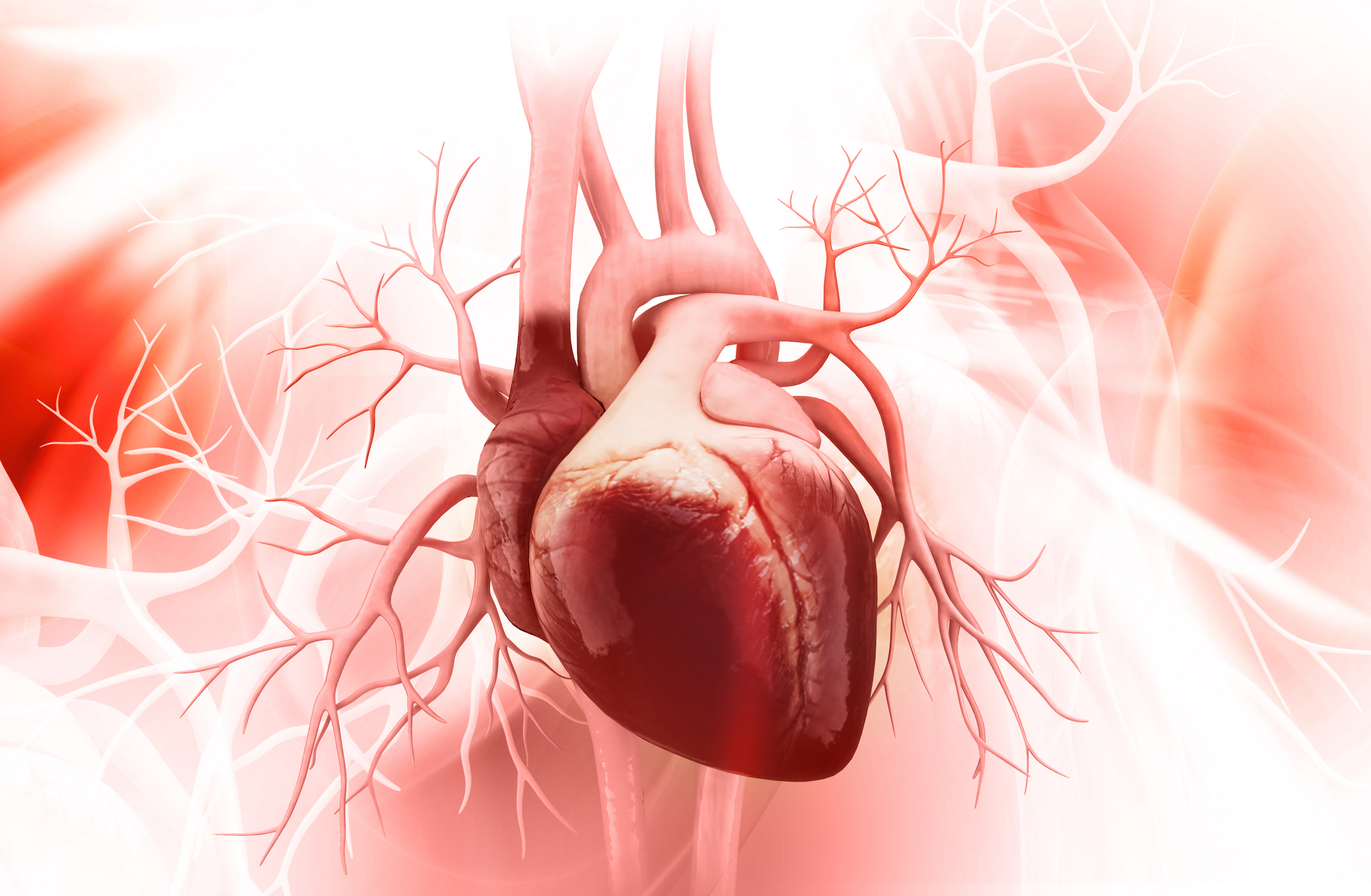Heart Regeneration Photo