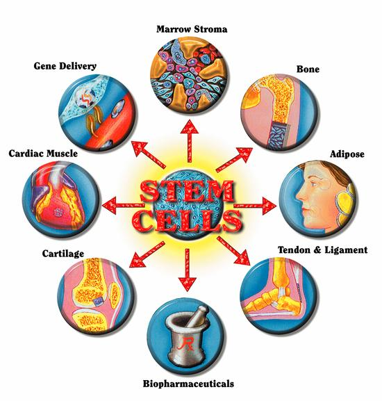 Ethical Issues of Stem Cell Biology and Therapies Photo