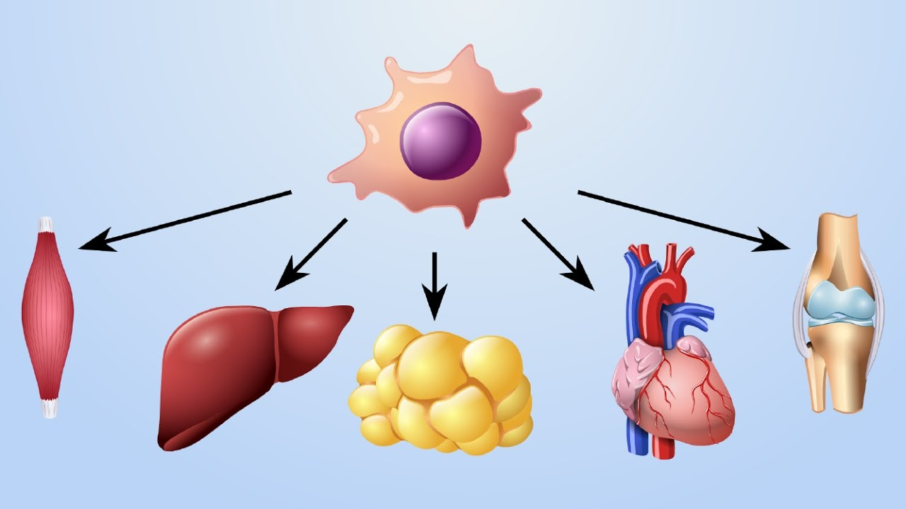 Stem Cell-Based Therapies Photo