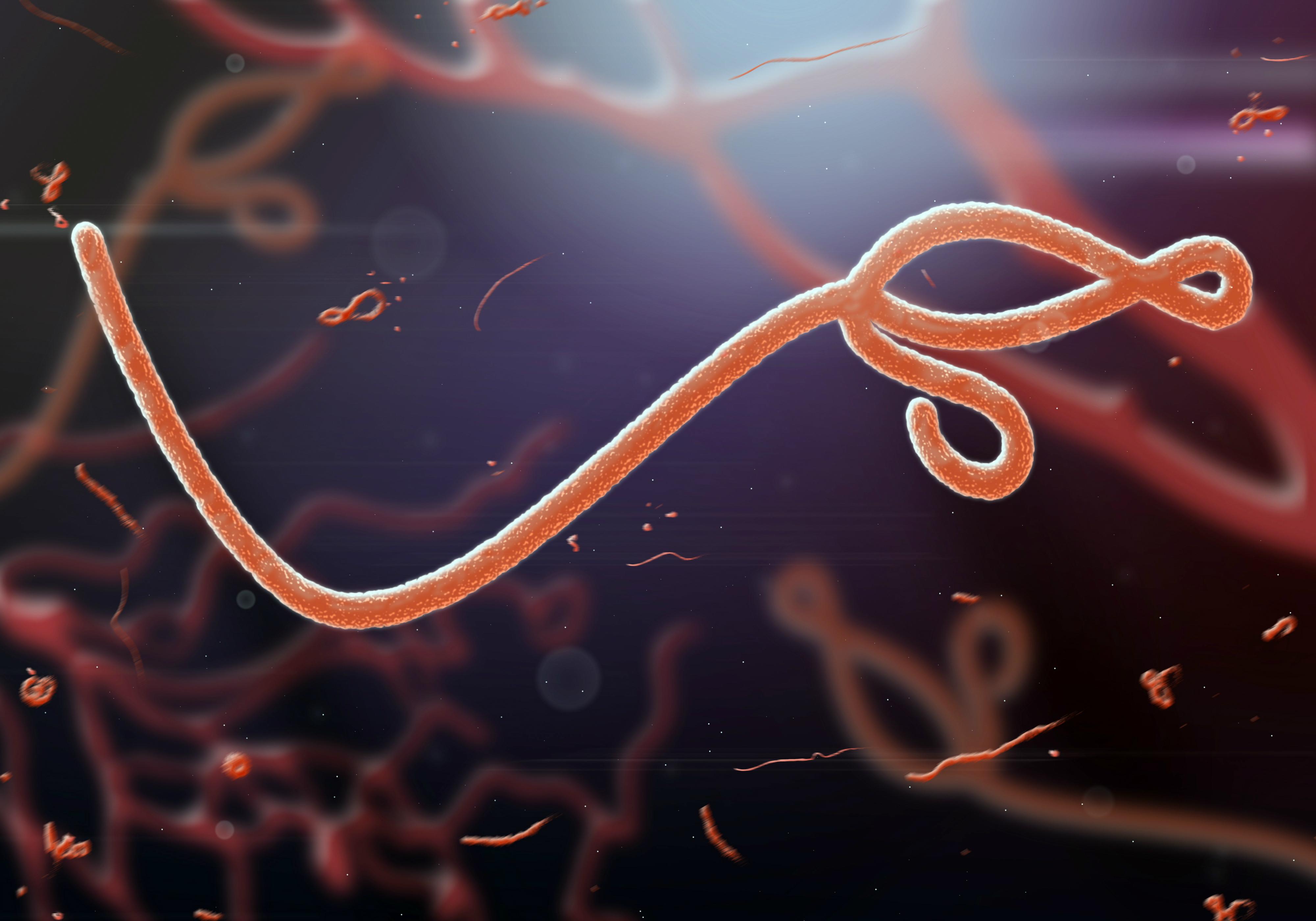 Veterinary infectious Diseases Photo