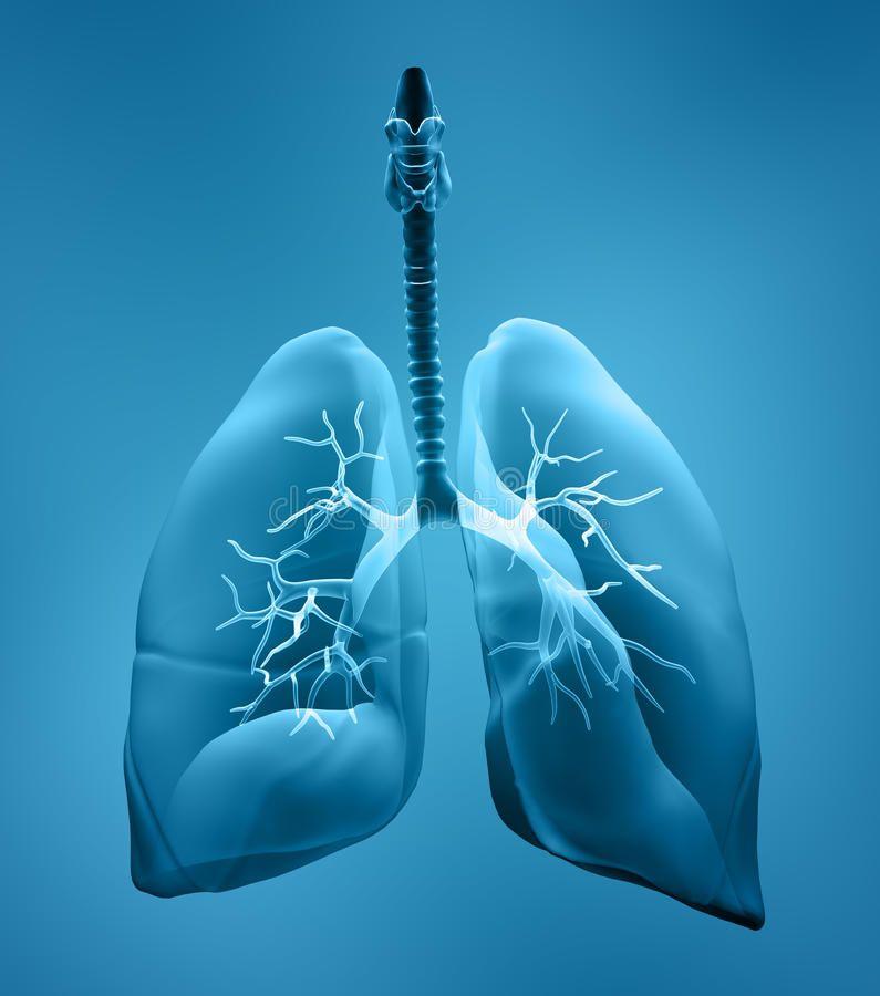 Idiopathic Pulmonary Fibrosis Photo