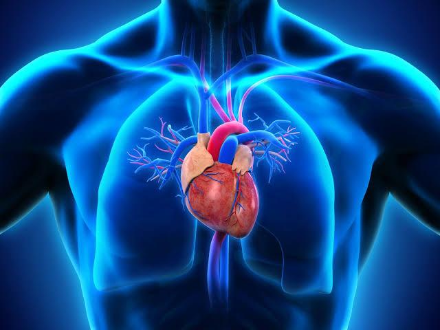 Cardiopulmonary Disease Photo