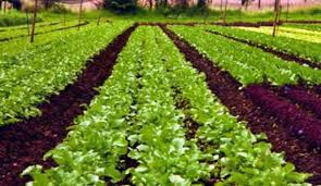 Organic Farming and Gardening Photo