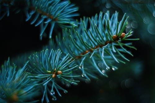 Plant biology Photo