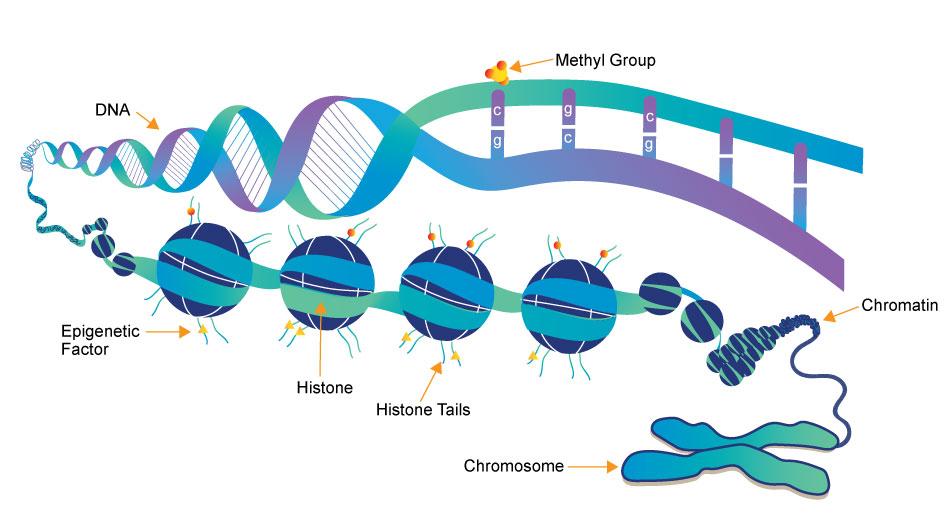 Epigenetic Pharmacology Chemistry Photo