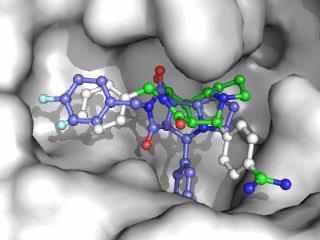 Molecular Docking Photo