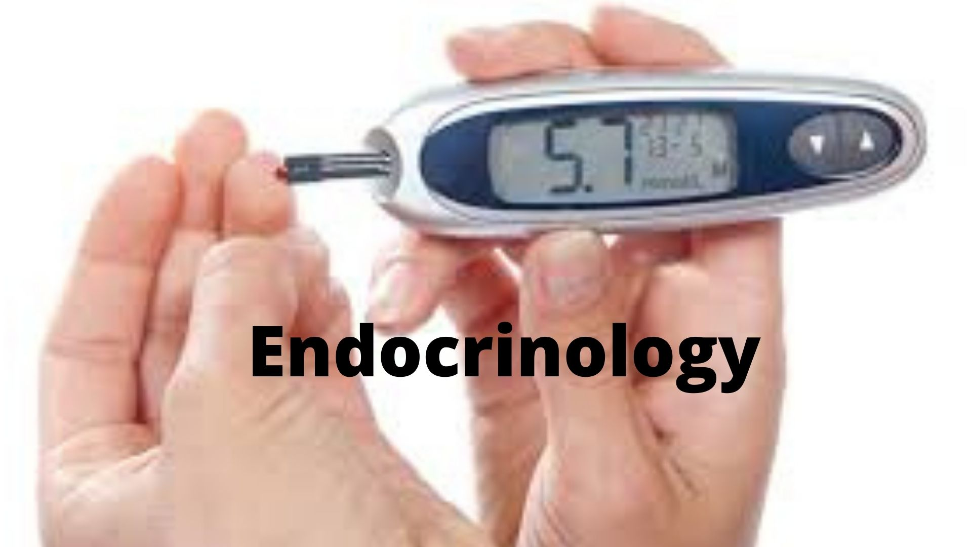 Endocrinology Photo