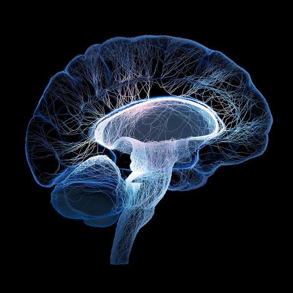 Neurobiology and Pathophysiology Photo