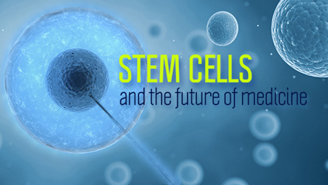 Future Prospects of Stem Cells Photo