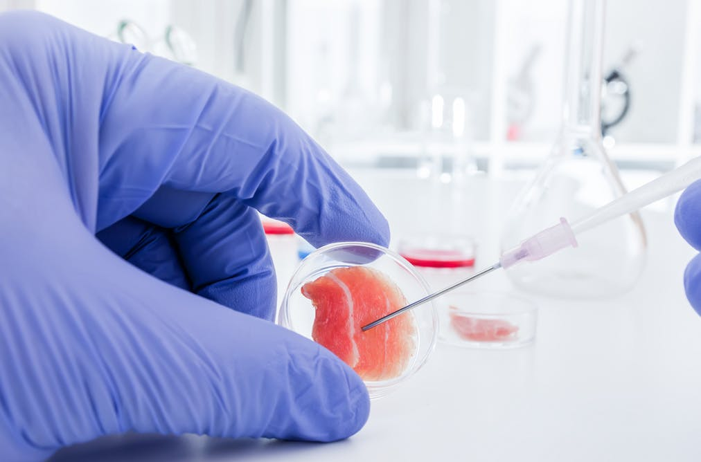 Stem Cell Research  Photo