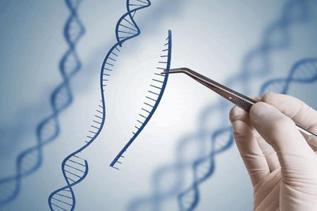 Genome Editing Photo