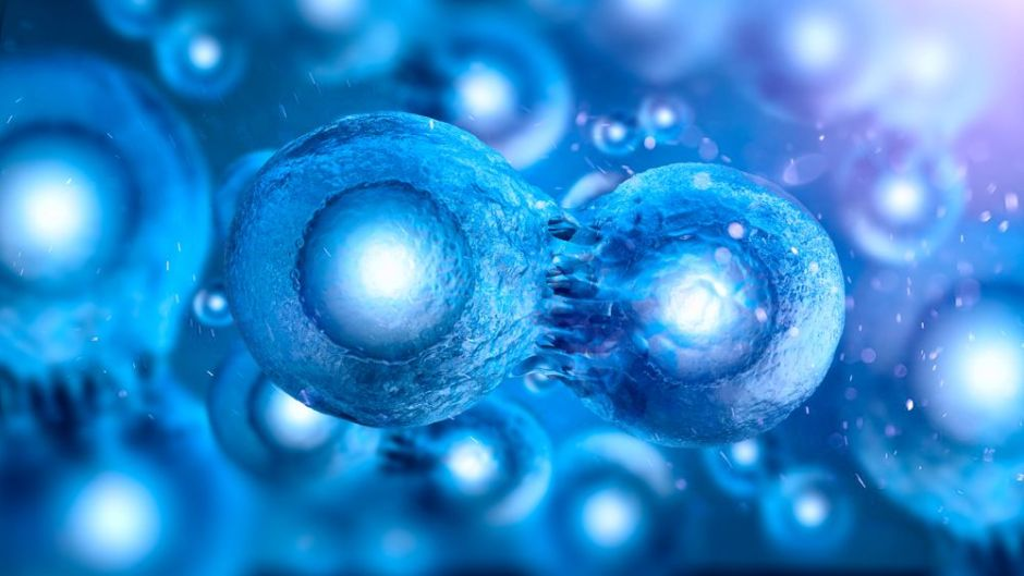 Stem Cells  Photo