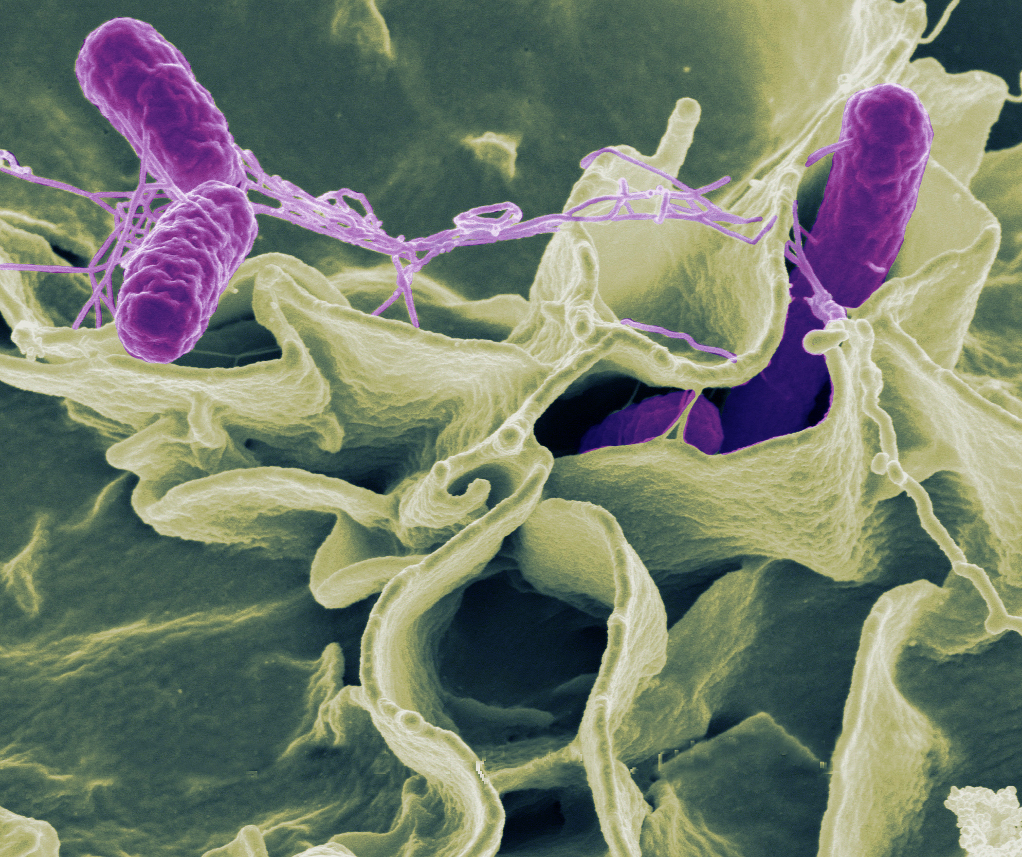 Emerging Microbes & Infection Photo