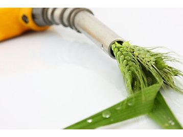 Biofuels & biodiesel  Photo