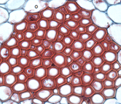 Biomaterials in Tissue Engineering Photo